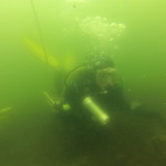 duiker in grevelingenmeer